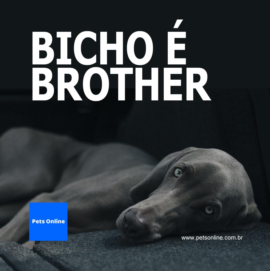 Flyer institucional para Instagram e Facebook para o portal Pets Online